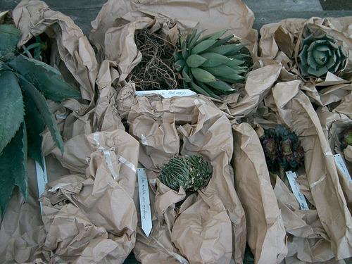 kat's cacti